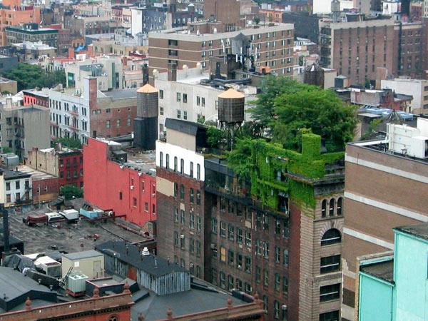 Type de toiture végétalisée